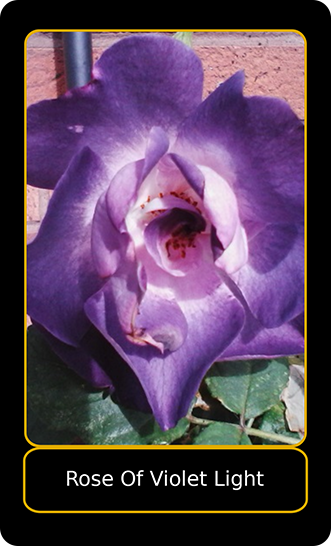 """Front view of the """"Rose of Violet Light"""" card"""